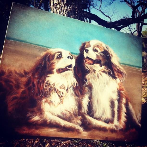 #oiloncanvas #oilpainting #dogs #dogportrait #atx #love #kingcharlesspaniel @spiritedwolflove #dogportraitpainting #art #texas–posted by spirited_wolf_art on Instagram