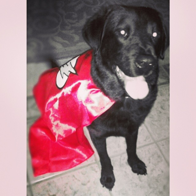 Super dog! #lovemypet #blacklab #tbt–posted by pmarie41 on Instagram
