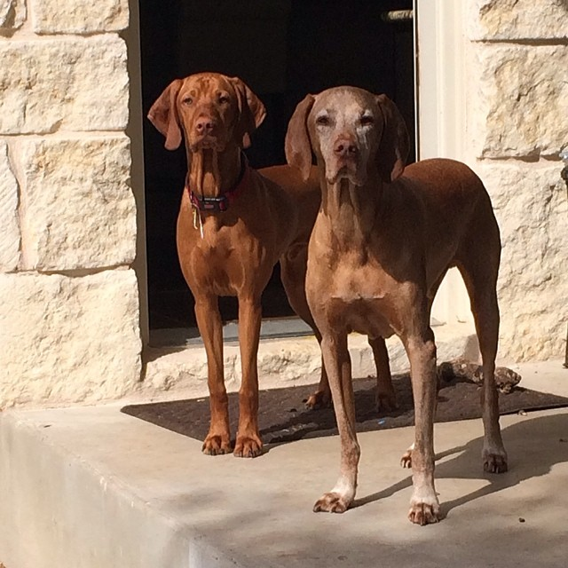 Two of my four handsome boys. #thedailyargus #thedailyjax –posted by stuperb on Instagram