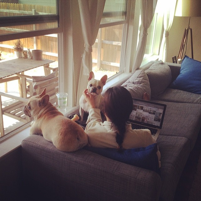 I'm somehow living my dream life…🌸 #instafrenchie #bulldogs #bulldogs #dogslife #frenchies #frenchiebullies #austinfrenchies–posted by handsomethepup on Instagram