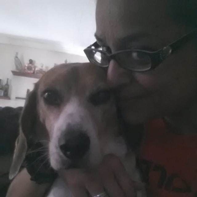 Tank always getting his cuddles with momma!! #beagle #spoiled #chiple #puppylove–posted by latweety23 on Instagram