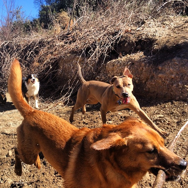 I love you like Lucy loves her stick #thenakeddog #austin #hiking #boarding #training #atx #dogsofaustin #dogsofinstagram #weekendoflove–posted by thenakeddog on Instagram