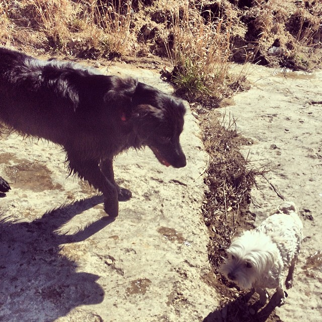 I love you guys in the terrifying and overwhelming way Audrey loves Daisy. Happy Valentines day! #thenakeddog #austin #hiking #boarding #training #atx #dogsofaustin #dogsofinstagram #valendogs–posted by thenakeddog on Instagram