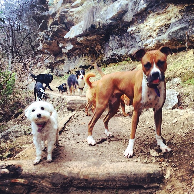Pups out and about #thenakeddog #austin #hiking #boarding #training #atx #dogsofaustin #dogsofinstagram–posted by thenakeddog on Instagram