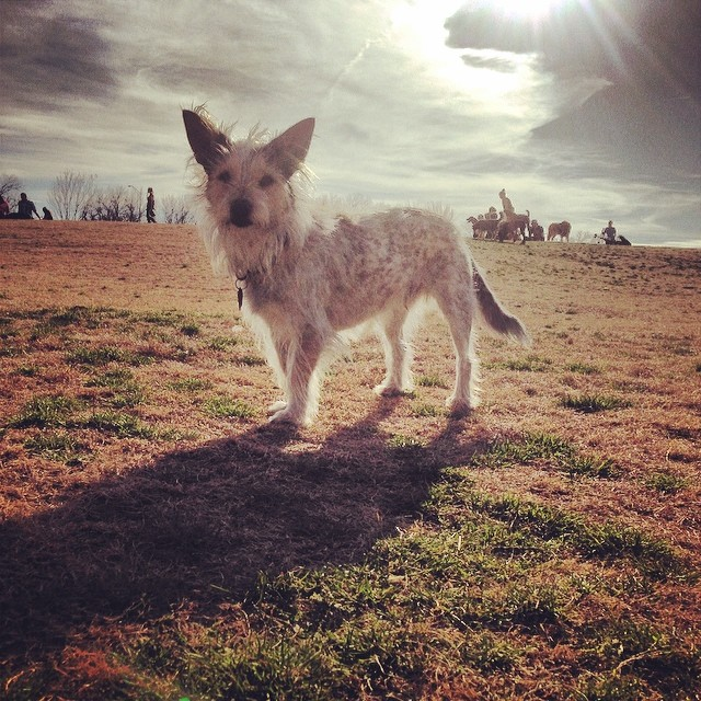 And then there was Sparky… #zilker #sparky #sparkydog #cairnsofinstagram #terriersofinstagram #terrier #woof #austintx–posted by thesparkydog on Instagram