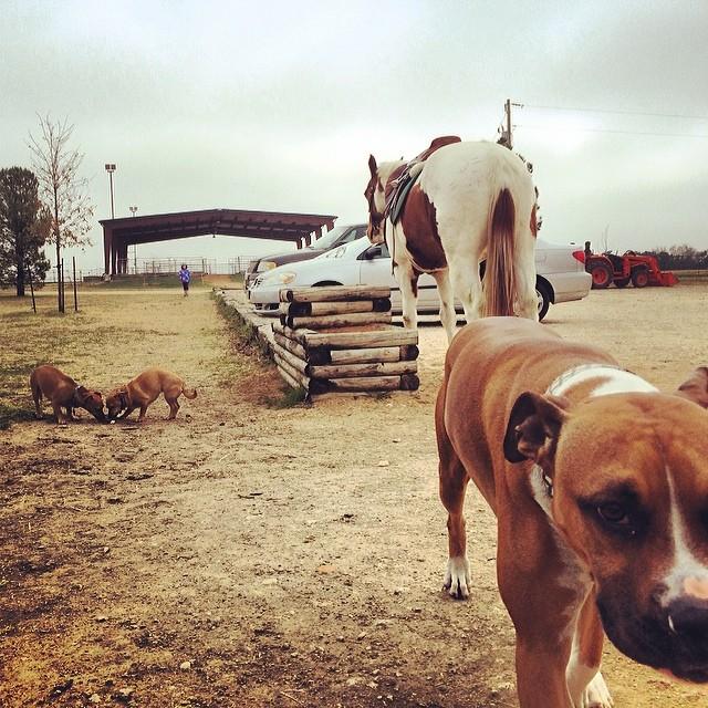 Puppies at the pony farm #thenakeddog #austin #hiking #boarding #training #atx #dogsofaustin #dogsofinstagram–posted by thenakeddog on Instagram