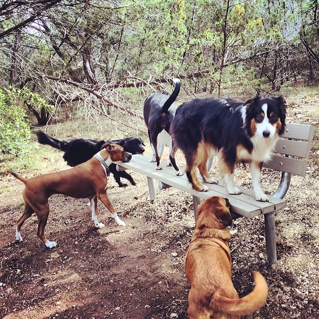 I love these ladies so much. They may not always do what I say, but I know they would do anything for me. Such a lucky lady to have such a wonderful job (even on a chilly day like today!) #thenakeddog #austin #hiking #boarding #training #atx #dogsofaustin #dogsofinstagram–posted by thenakeddog on Instagram