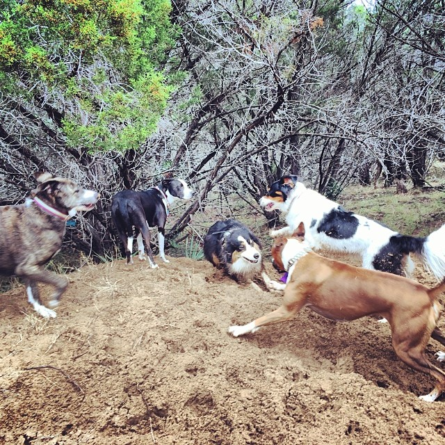 This is Cassie's favorite game #thenakeddog #austin #hiking #boarding #training #atx #dogsofaustin #dogsofinstagram–posted by thenakeddog on Instagram