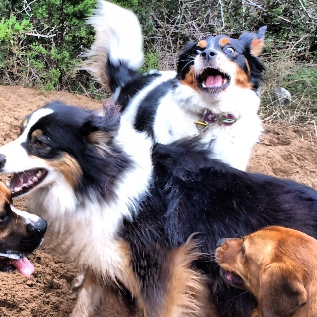Pic of the day #thenakeddog #austin #hiking #boarding #training #atx #dogsofaustin #dogsofinstagram–posted by thenakeddog on Instagram