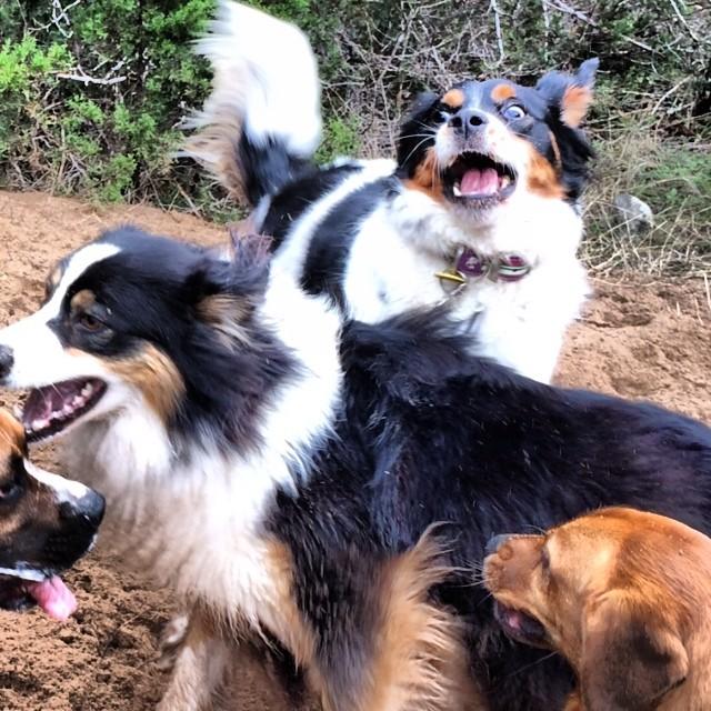 Pic of the day #thenakeddog #austin #hiking #boarding #training #atx #dogsofaustin #dogsofinstagram–posted by thenakeddog on Instagram
