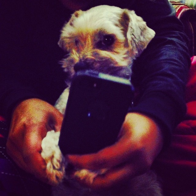 My mom caught me playing with the phone. Uh oh!–posted by grendel_thedog on Instagram