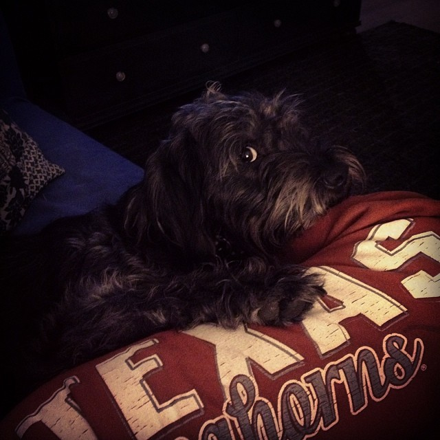 Love of my life. #mcm #mancrushmonday #walter #puppylove #texas #hookem #whitewineandsweatpants–posted by paintingtosurvive on Instagram