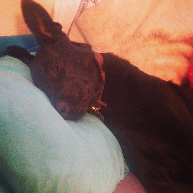 …What a freakin pillow hog.–posted by corriececilia on Instagram