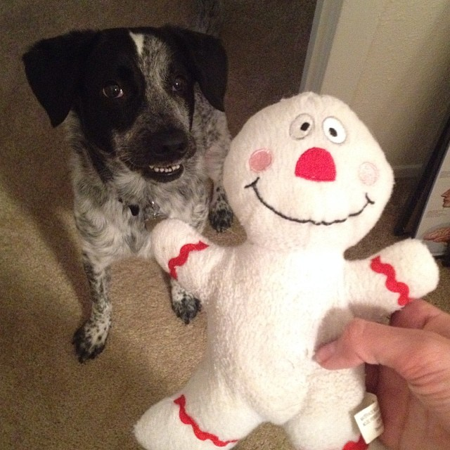 this is the first toy Moshi has yet to destroy. I think it's her favorite! and check out her massive derp face 😂–posted by ljapaneseguml on Instagram