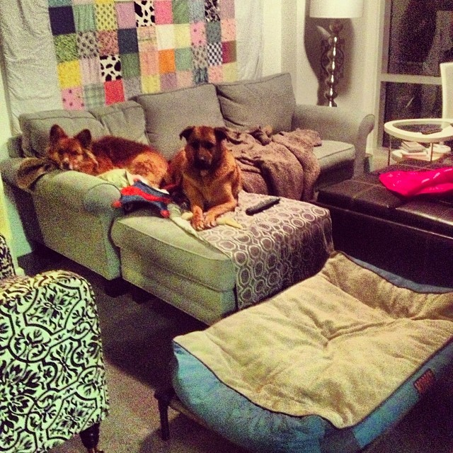 #highriseliving #cutest #WhoseHouseIsThis?! #dogs #doghouse–posted by pawticular on Instagram