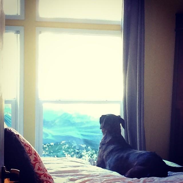 Watch dog, watching. –posted by austindirtydog on Instagram