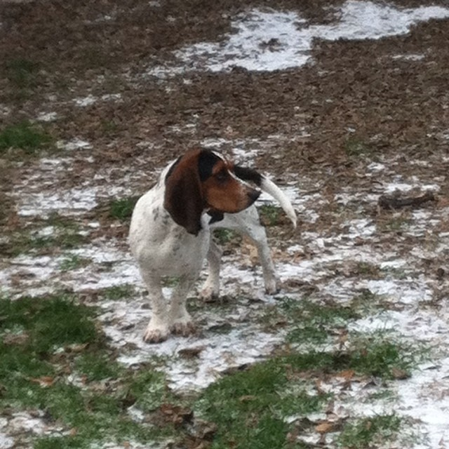 Waffles 1st winter storm. #austintx #bassethound–posted by karensinaustin on Instagram