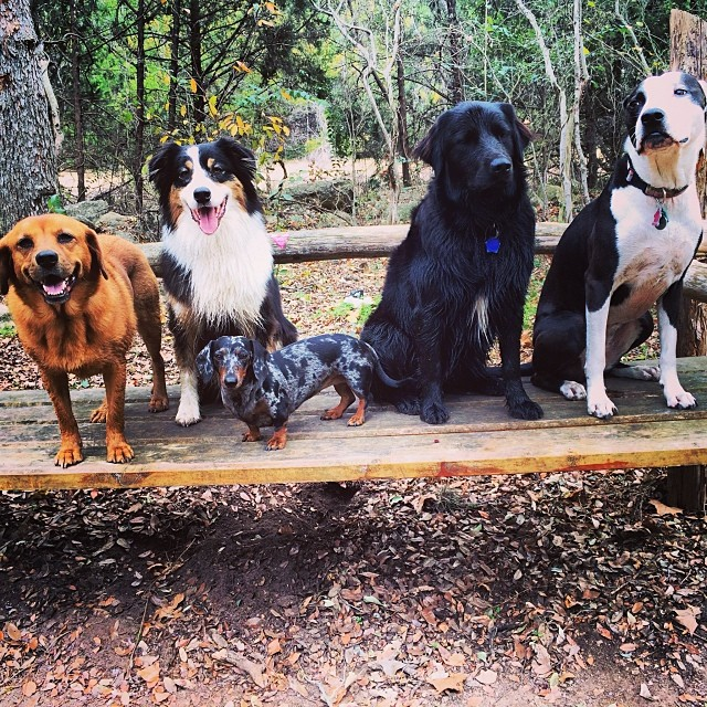 The Naked Dog family #thenakeddog #austin #hiking #boarding #training #atx #dogsofaustin #dogsofinstagram–posted by thenakeddog on Instagram