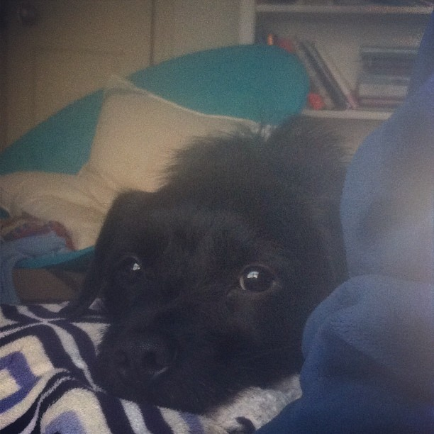 I see you!!! My love, my Huck!!!!! ❤❤❤#blackdog #huck #mydog #myson #mylove #socute #terrier #mutt–posted by chelsearoseknows on Instagram