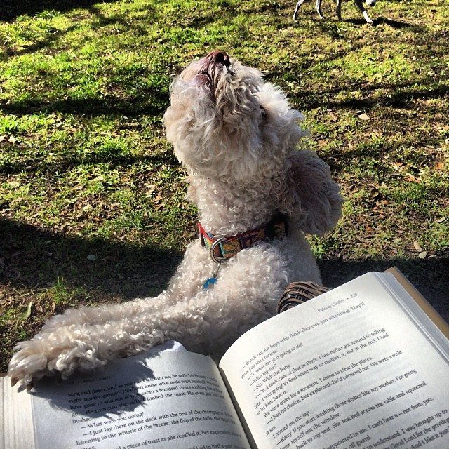 Fibee loves a good afternoon read in the sun #thenakeddog #austin #hiking #boarding #training #atx #dogsofaustin #dogsofinstagram–posted by thenakeddog on Instagram