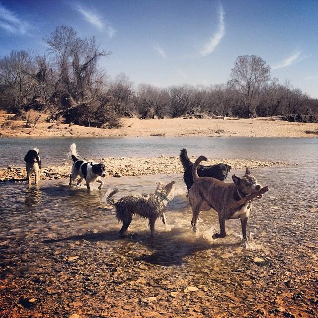 The gang #thenakeddog #austin #hiking #boarding #training #atx #dogsofaustin #dogsofinstagram–posted by thenakeddog on Instagram