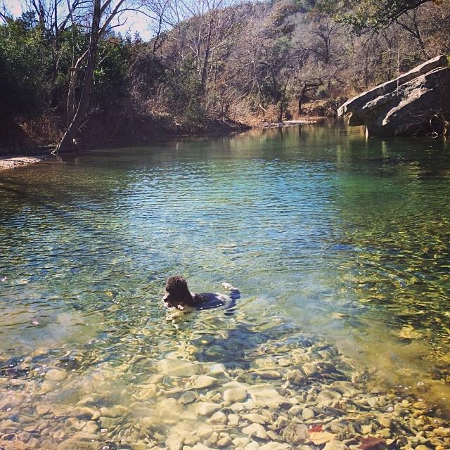 Minette taking a dip #thenakeddog #austin #hiking #boarding #training #atx #dogsofaustin #dogsofinstagram–posted by thenakeddog on Instagram