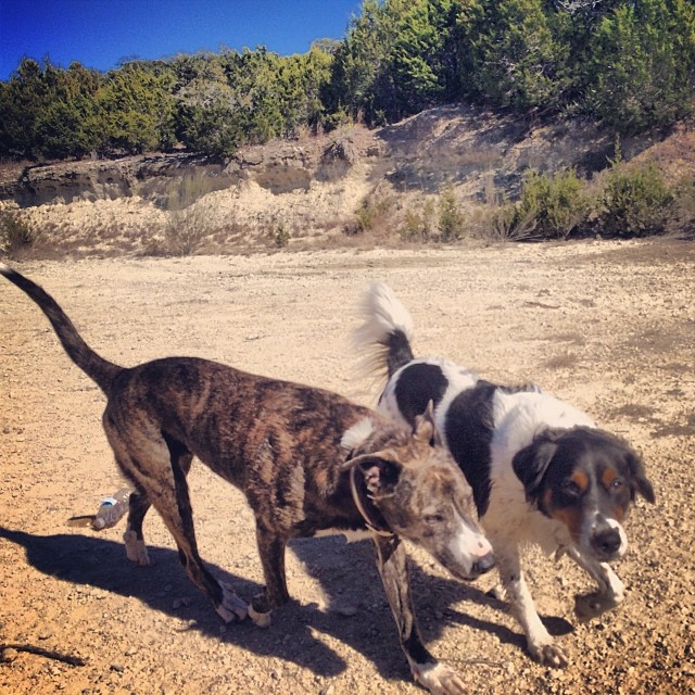 Seeesters #thenakeddog #austin #hiking #boarding #training #atx #dogsofaustin #dogsofinstagram–posted by thenakeddog on Instagram