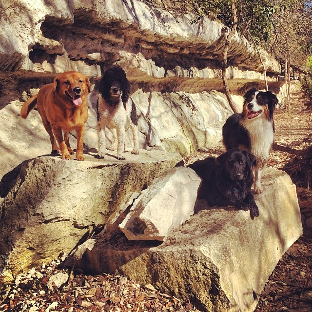 Family photo #thenakeddog #austin #hiking #boarding #training #atx #dogsofaustin #dogsofinstagram–posted by thenakeddog on Instagram