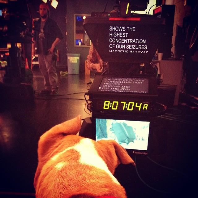 Our view from the @kvuenews stage - Janie (and her hilarious #ears) was a perfect #Petoftheweek! Adopt this calm, potty-trained pup at TLAC (1156 Cesar Chavez in #ATX) today!  #adoptme #muttsofig #cattledogs #catahoulas–posted by chantwall on Instagram