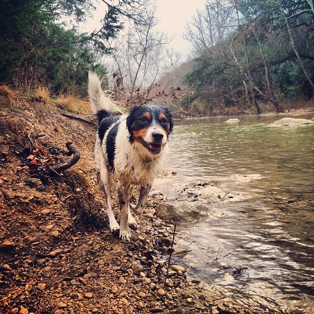 Chuy #thenakeddog #austin #hiking #boarding #training #atx #dogsofaustin #dogsofinstagram–posted by thenakeddog on Instagram