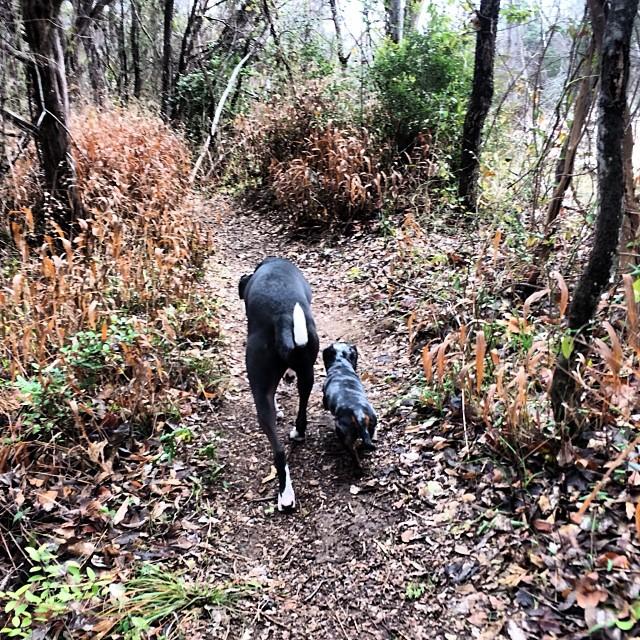 Besties #thenakeddog #austin #hiking #boarding #training #atx #dogsofaustin #dogsofinstagram–posted by thenakeddog on Instagram