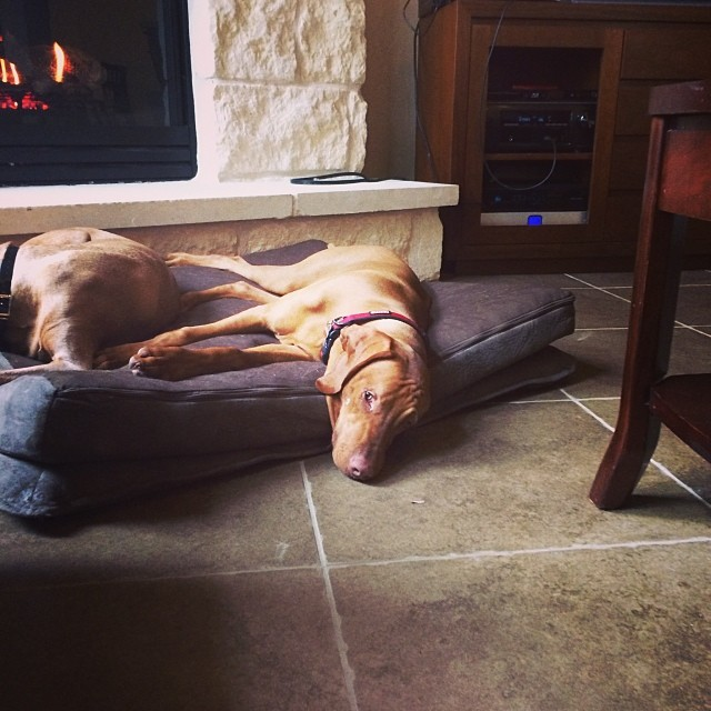 One worn out puppy. One happy mama. #thedailyargus –posted by stuperb on Instagram