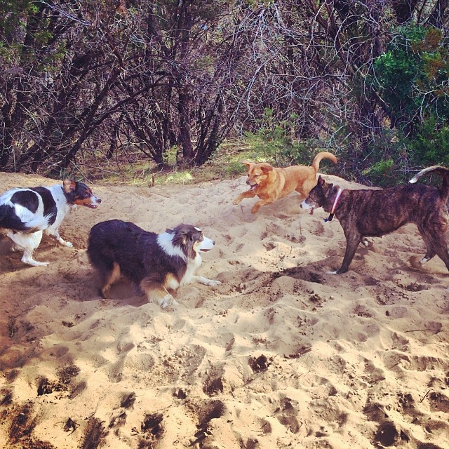 The gang's all here #thenakeddog #austin #hiking #boarding #training #atx #dogsofaustin #dogsofinstagram–posted by thenakeddog on Instagram
