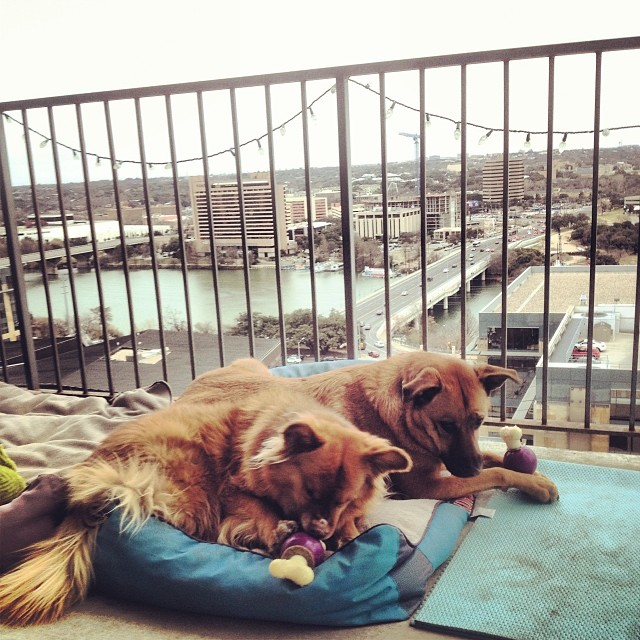 #highriseliving #thegoodlife #dogs–posted by pawticular on Instagram