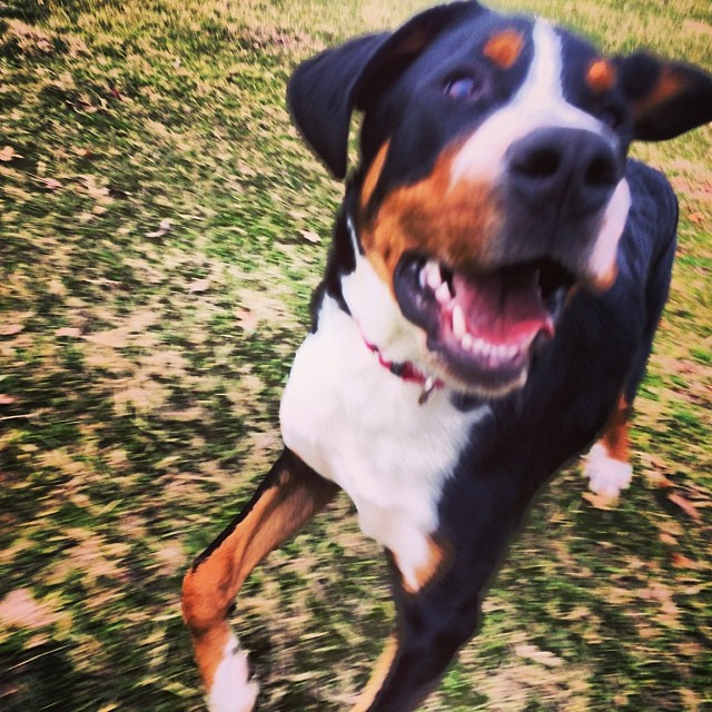 Rowdy #thenakeddog #austin #hiking #boarding #training #atx #dogsofaustin #dogsofinstagram–posted by thenakeddog on Instagram
