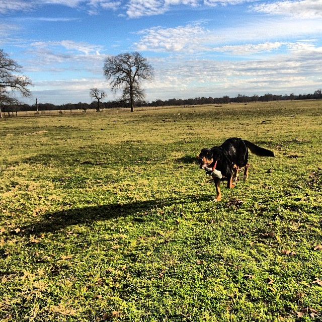 Why the long shadow, Ginny?–posted by thenakeddog on Instagram