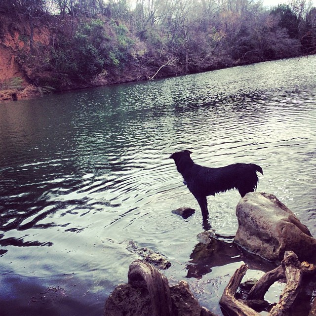 Silhouette of Sylvie #thenakeddog #austin #hiking #boarding #training #atx #dogsofaustin #dogsofinstagram–posted by thenakeddog on Instagram