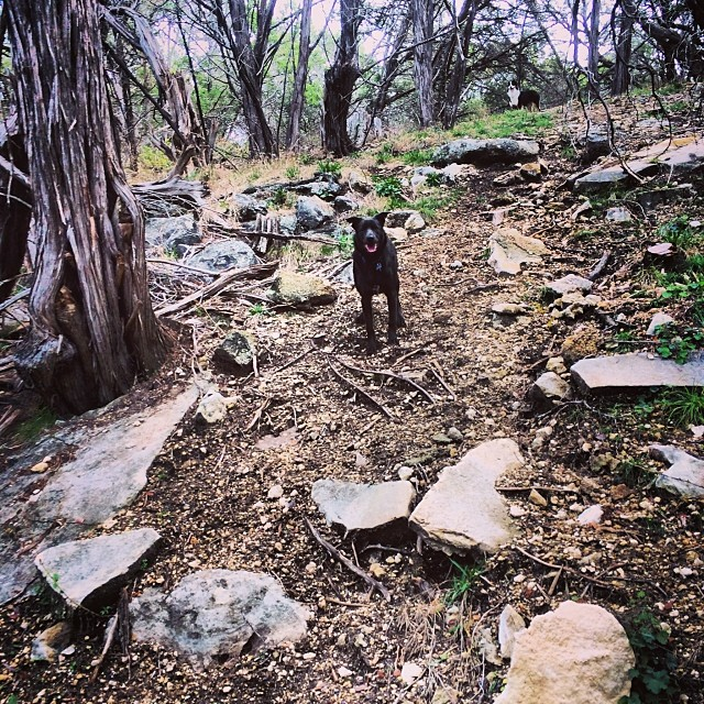 Posing #thenakeddog #austin #hiking #boarding #training #atx #dogsofaustin #dogsofinstagram–posted by thenakeddog on Instagram