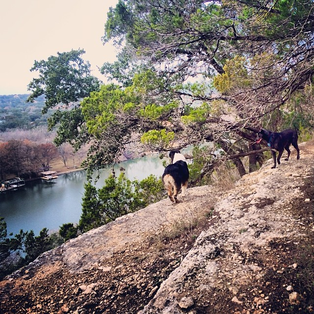 Dogs on the ledge #thenakeddog #austin #hiking #boarding #training #atx #dogsofaustin #dogsofinstagram–posted by thenakeddog on Instagram