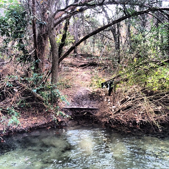 Cas across the creek #thenakeddog #austin #hiking #boarding #training #atx #dogsofaustin #dogsofinstagram–posted by thenakeddog on Instagram
