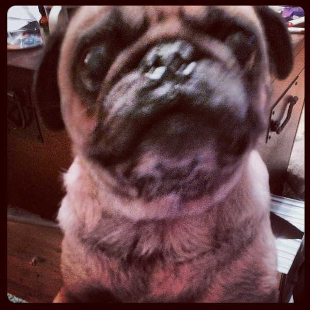 Buttons' struggle face. #thestruggleisreal –posted by lesman on Instagram