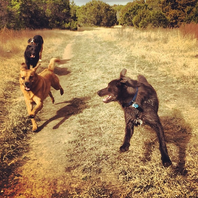 Christmas hike #thenakeddog #austin #hiking #boarding #training #atx #dogsofaustin #dogsofinstagram–posted by thenakeddog on Instagram