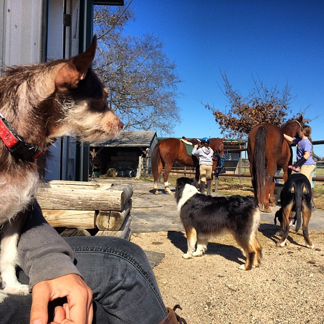 Bell at the barn #thenakeddog #austin #hiking #boarding #training #atx #dogsofaustin #dogsofinstagram–posted by thenakeddog on Instagram