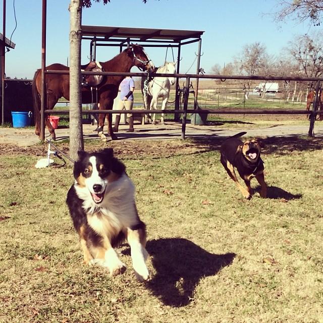 A fun Christmas Eve at the barn #thenakeddog #austin #hiking #boarding #training #atx #dogsofaustin #dogsofinstagram–posted by thenakeddog on Instagram