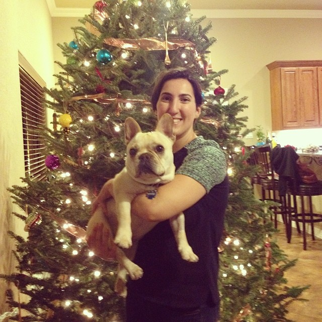 Austin Frenchie Holiday Party! #buhi #bulldogs #dogslife #austin #austinbulldogs #ilovemydog #instafrenchie–posted by handsomethepup on Instagram