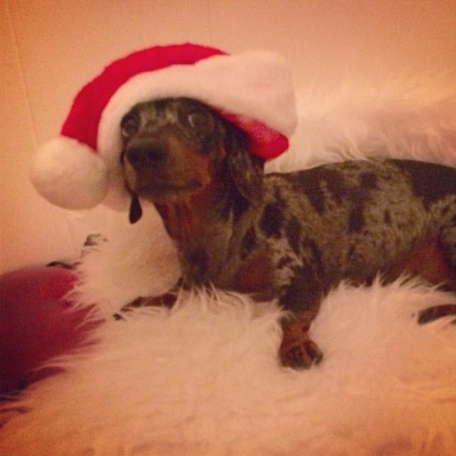 Hohoho! Preview of the Xmas festivities The Naked Dog has planned… #thenakeddog #austin #hiking #boarding #training #atx #dogsofaustin #dogsofinstagram–posted by thenakeddog on Instagram
