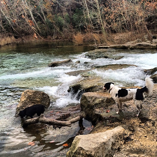 Chuy at the waterfall #thenakeddog #austin #hiking #boarding #training #atx #dogsofaustin #dogsofinstagram–posted by thenakeddog on Instagram