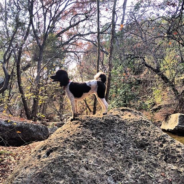 Minette silhouette #thenakeddog #austin #hiking #boarding #training #atx #dogsofaustin #dogsofinstagram–posted by thenakeddog on Instagram