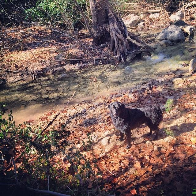 Audrey striking a pose #thenakeddog #austin #hiking #boarding #training #atx #dogsofaustin #dogsofinstagram–posted by thenakeddog on Instagram