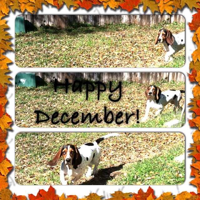 Waffles loves to run #bassethound  #winterfun #austintx –posted by karensinaustin on Instagram